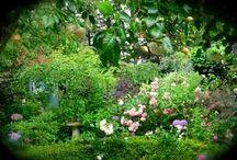 giardini segreti-secret garden