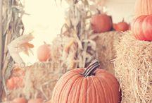 Fall Ya'll / by Kaitlynd Nichol
