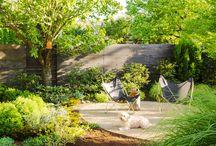 Dog Friendly Backyards
