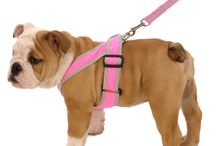 English Bulldog Products, Accessories | Harness, Coat, Clothes Gifts Bulldog Lover | My Canine Kids / Products for English Bulldogs with Precision Fit! Fully adjustable coats and clothes for Bulldogs that adjust around the waist. Coats for Bulldogs, Harnesses for Bulldogs and clothes the fit your Bulldog. My Canine Kids and Cloak & Dawggie products for your Bulldog - English!