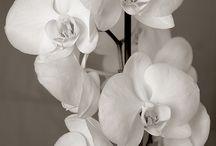 Flowers make everything better