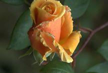 #flores / Las flores me parecen bellas y perfectas...