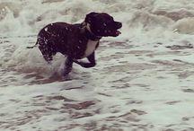 Il mare d'inverno... / Gabicce mare in inverno...