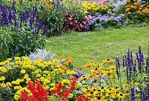 Kvetinovd zahony-zahrada