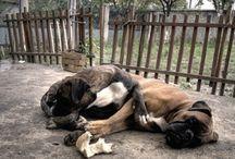 DogDaycareBusiness