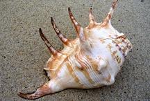 SeaShells / by Keisha Scott