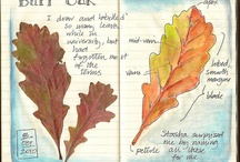 Nature Journal / by Michelle Stacy Davidson