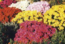 On aime les fleurs