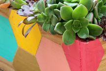 Green / Plants plant plants.