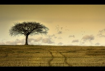 Trees / by Nyla Parker