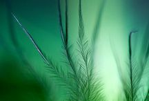 Green ephemera