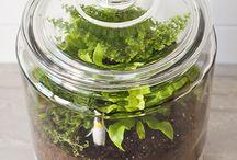 Tiny ecosystem DIY