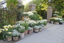 Have garden