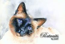 Pet Portraits In Color