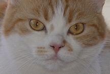 Cat ...  =^.^=  DUCHESSA / MICIA BIANCO/ROSSO
