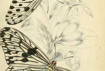 Рисунки бабочек.
