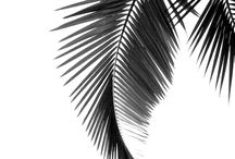 Palm tree board