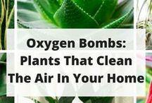 Légtisztító zöldek