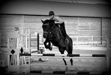 Horsestep.com