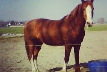 Theo / This Board is all about Theo, our 12 year old gelding Gelders Horse.