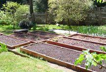 Yard & Garden / by Debbie Thomas