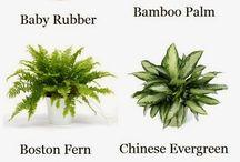 Plantas q limpian el aire