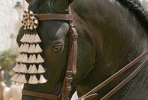 Andalucía, sus caballos y estilo Lu