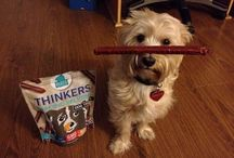"""Plato Famous Dogs / We love when you send us pictures of your dog with their favorite Plato Pet Treats! This is where we like to recognize all the furry Plato """"models"""" for the world to see!"""