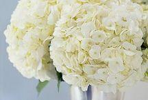 Flowers / by Courtney Brown Stylist