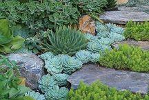 Succulentes et jardin