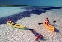 Intrepid FLORIDA