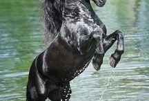 horse.dreams