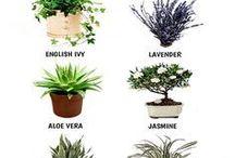 Bedrooms plants