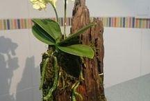 plantas em toco de madeira