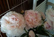Flower / I love it