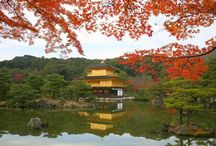 Love Kyoto / Let's Pin It together! You'll collect favorite Kyoto scene. Please add to this board about Kyoto. No spam, No nudity, No advertising! If you would like to be added to this group, please send me an email with your pinterest profile link at : pinterest@mutojapan.com. Happy Pinning!