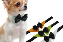 Coco's wedding outfit / Chihuahua - bow tie - formal