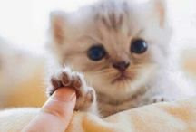 Kitten / cute and lovely kittens :3 #kitten #cat