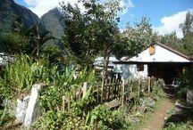 Agriculture durable à la Réunion