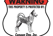 Canaan Dog Signs and Pictures / Warning and Caution Canaan Dog Signs. https://www.signswithanattitude.com/canaan-dog-signs.html