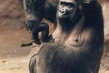 monos varios