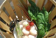 Vegetable Gardening Info / by Ronnie Fedun