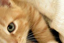 chatcats