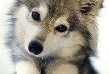 Animaux chien