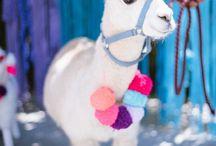 My llama