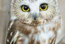Photography - Animals -Night birds