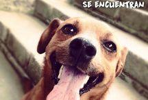 Whapets App Perros / Perros, Adoptar mascotas, perros en adopción, Whapets App, mascotas perdidas, adopción cachorros, adoptar mascotas, http://whapets.com/