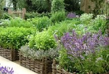 Herbs and Herb Gardens / by Didi Dreams...