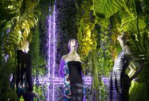 Windows Displays by Dior