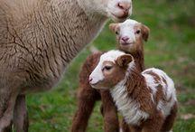 Cute Animals & Pets